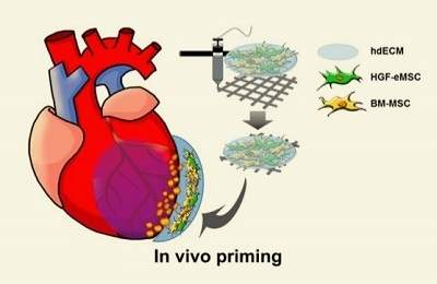 A 'Cardiac Patch with Bioink' Developed to Repair Heart